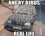 Click image for larger version.  Name:irl-angry-birds.jpg Views:38 Size:11.8 KB ID:166331